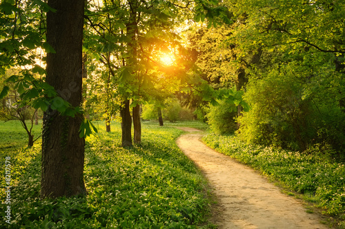 Tuinposter Tuin Path on the park