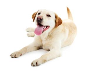 Cute dog isolated on white background