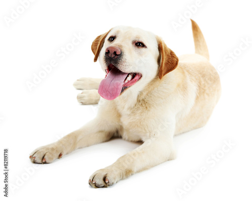 Fotobehang Hond Cute dog isolated on white background