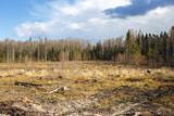 Woods logging stump after deforestation woods