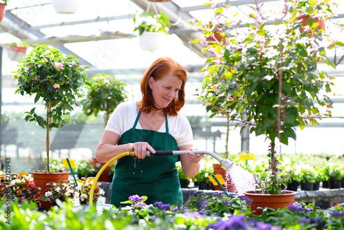 Gärtnerin gießt Pflanzen im Gartencenter - 82121943