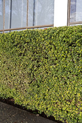 Shrubbery Outside Building
