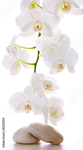 Plexiglas Orchidee Massage Stones with Orchid.