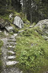 Stone Steps on Forest Path