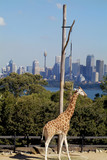 Australia Zoology poster