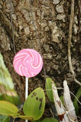 Candy valentines on a tree in the garden.