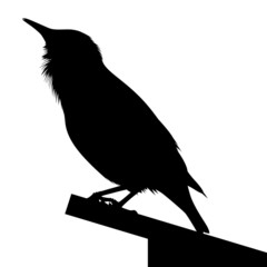 Detailed silhouette of bird