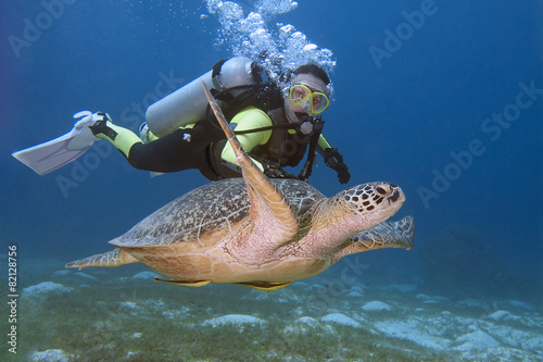 Foto op Canvas Schildpad Diver and turtle