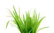 Leinwanddruck Bild - Green grass isolated on white
