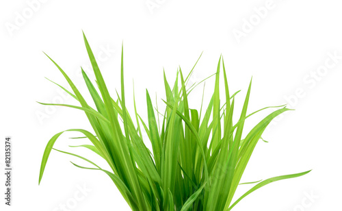 Fotobehang Lente Green grass isolated on white