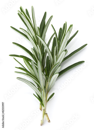 In de dag Kruiden rosemary herb spice leaves isolated on white background cutout