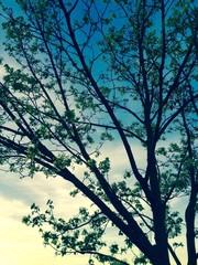 Blühender Baum im Frühling, Frühlingsanfang