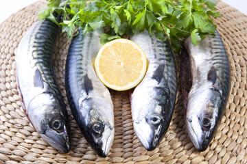 Four mackerels fish over rattan surface