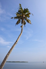 Palm Tree with Ocean in Background