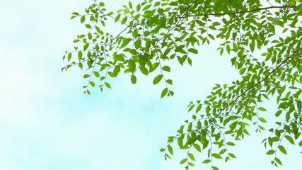 春風に揺らぐ新緑