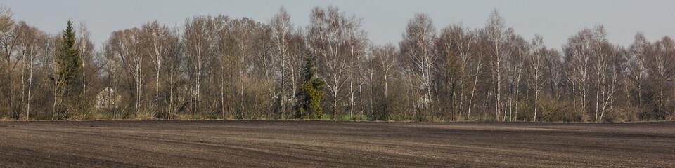 Birkenwald Felder Längsformat