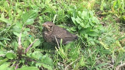 Uccello immezzo alla natura, slowmotion 0,5 X