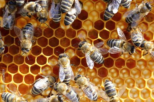Fotobehang Bee Honigarbeit