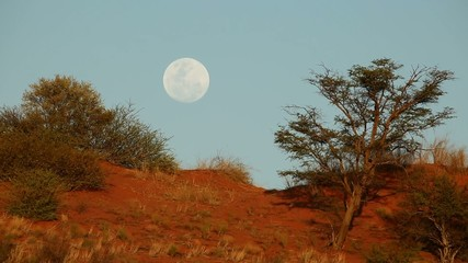 Moon in blue sky over Kalahari sand dune