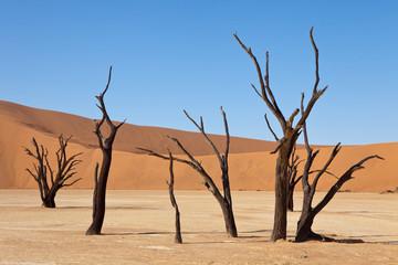 desert of Namibia