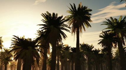 Tropical jungle background with palm tree silhouettes at sunset