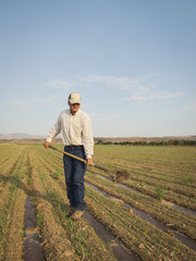 Caucasian farmer planting seeds in crop field