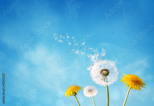 Aluminium Bloemen Dandelion clock dispersing seed