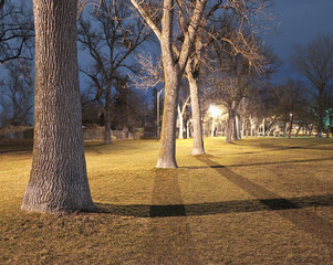 Row of Trees in a Park at Night