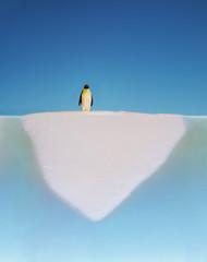 Penguin walking on melting glacier