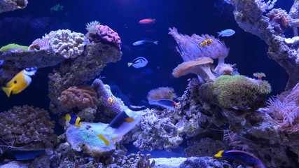 Underwater coral reef and fishes