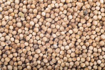 Textura de la especia de semillas de cilantro