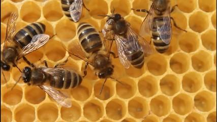 Building instinct bees.