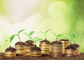 Investment. Golden coins in soil with young plant isolated