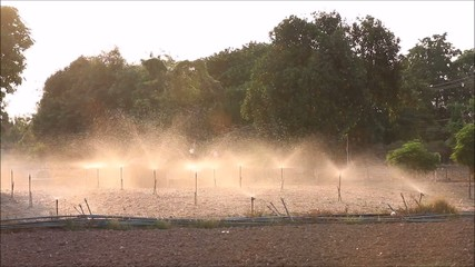 Water sprinklers on soil of Vegetable garden, backlight
