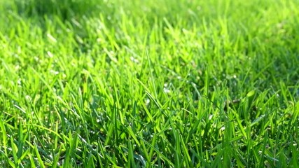 Green fresh grass as a nice footage background