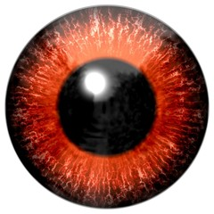 Detail of eye with orange colored iris and black pupil