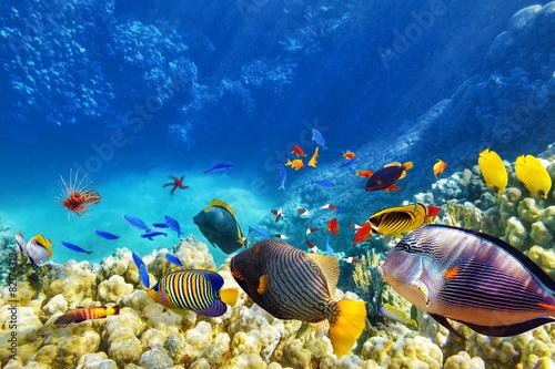 Leinwandbild Motiv Underwater world with corals and tropical fish.