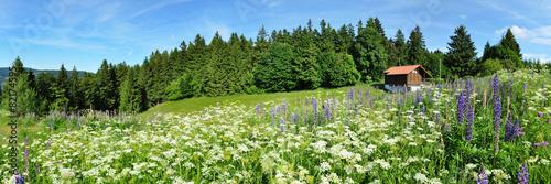 Leinwanddruck Bild Idylle im Thüringer Wald