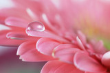 Flower with water drop. Soft focus. Made with macro-lens.