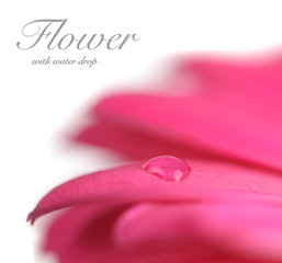 Flower with water drop. Soft focus. Made with lens-baby and macr