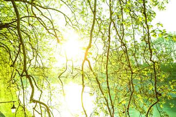Sonnenlicht durch die Zweige
