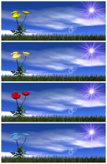 Set of colorful poppy flowers - 3D render