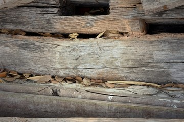 Background image of old wood from nature.