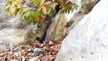Autumn maple and waterfall