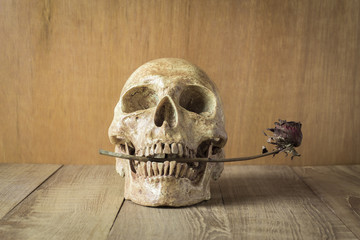 skull and sear rose still life on wood background