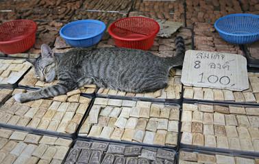 Cat sleeping on trinkets in marketplace