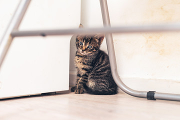 Lonely Tabby Kitten Sitting at the House Corner
