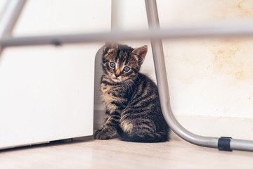 Blue Eyed Tabby Kitten Staying at the Corner