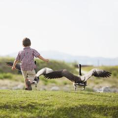 Caucasian boy feeding geese