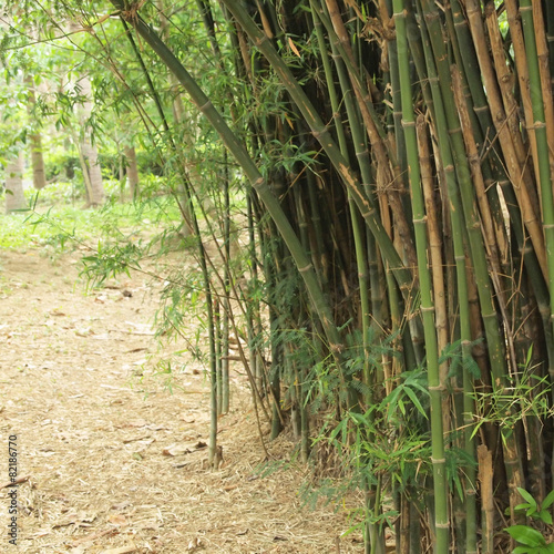 In de dag Bamboo Bamboo forest. Trees background inside tropical jungle